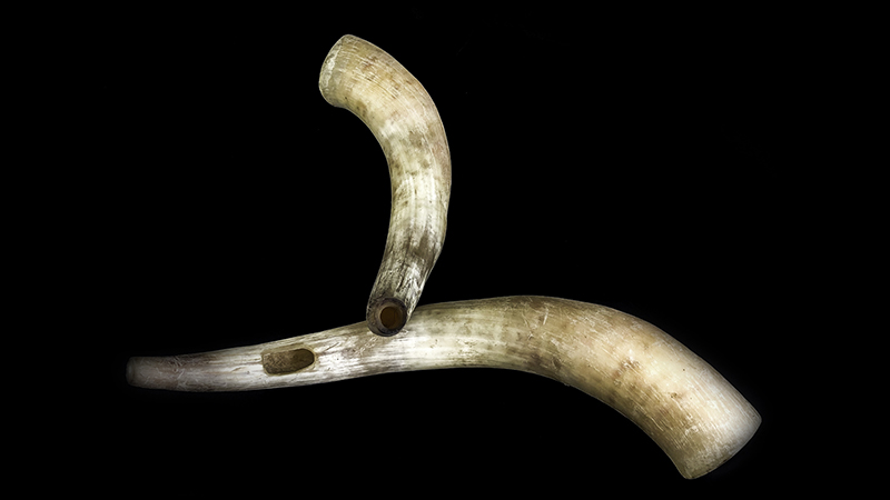 mouthpieces cow and bull horn pairs © Ancient Music Ireland
