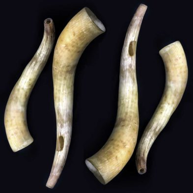 cow and bull horn pairs © Ancient Music Ireland