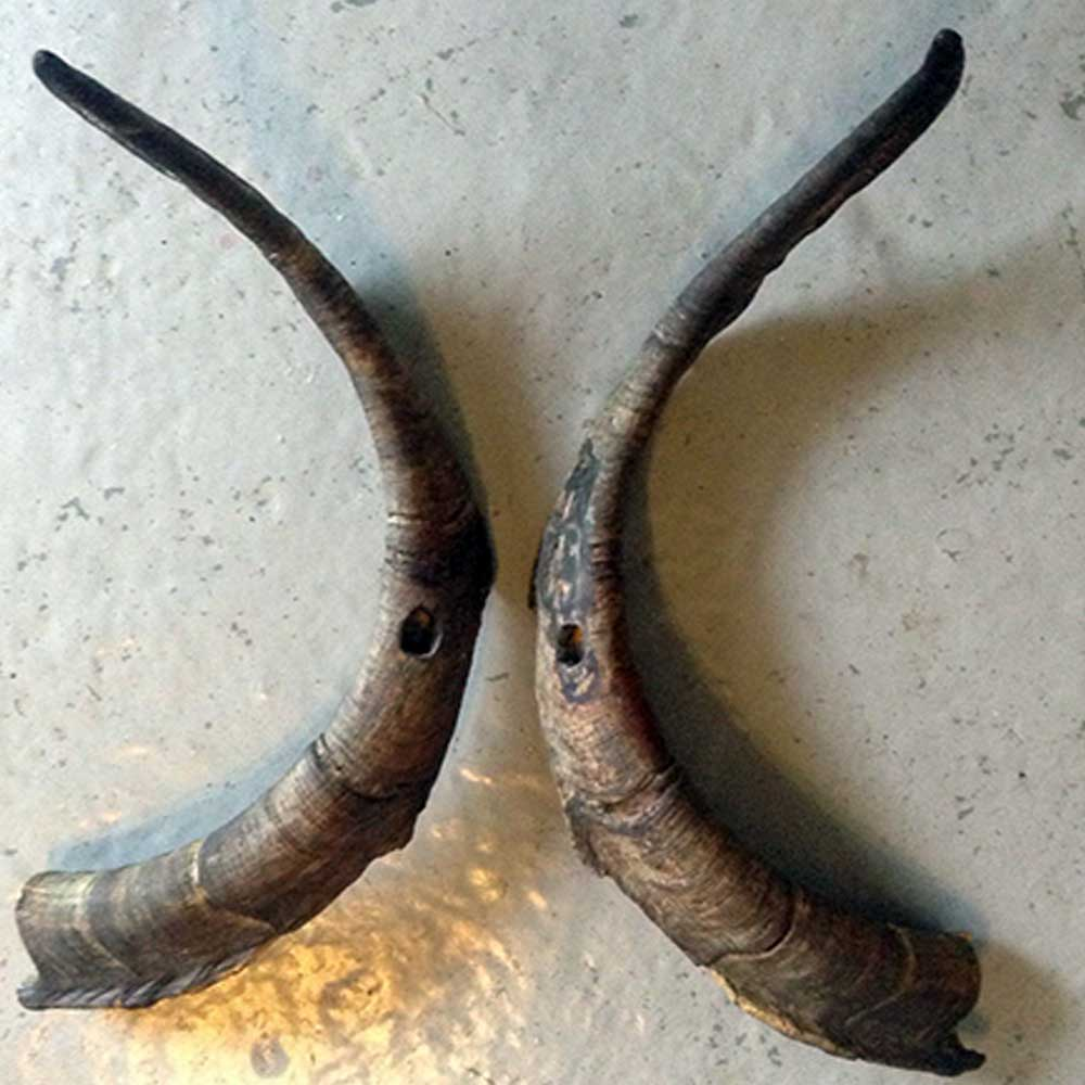 goat horns © Ancient Music Ireland